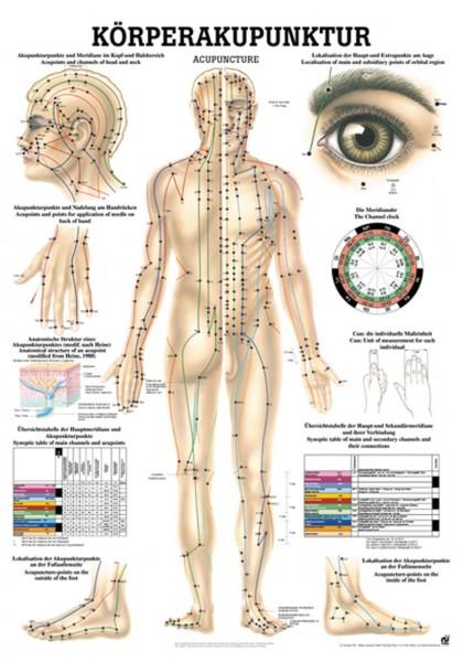 Lehrtafel - Körperakupunktur