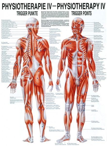 Lehrtafel - Physiotherapie 4